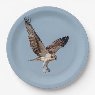 Jugendlicher Osprey im Flug Pappteller