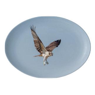 Jugendlicher Osprey im Flug Porzellan Servierplatte