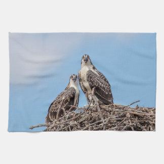 Jugendlicher Osprey im Nest Handtuch