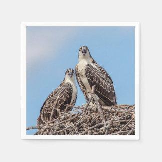 Jugendlicher Osprey im Nest Papierserviette