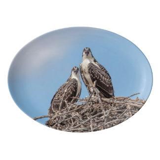 Jugendlicher Osprey im Nest Porzellan Servierplatte