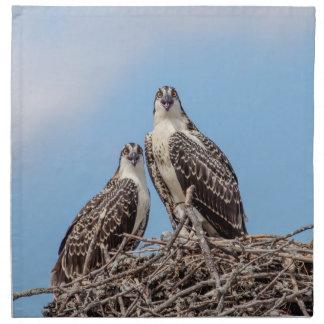 Jugendlicher Osprey im Nest Stoffserviette