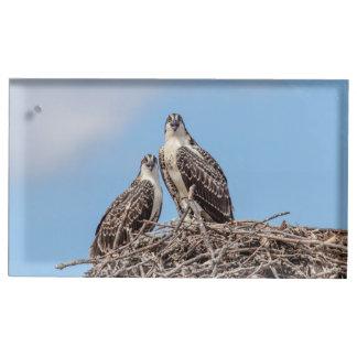 Jugendlicher Osprey im Nest Tischkartenhalter