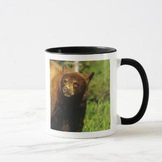 Jugendlicher schwarzer Bär in den Waterton Seen Tasse