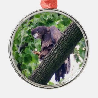 Jugendlicher Weißkopfseeadler Rundes Silberfarbenes Ornament