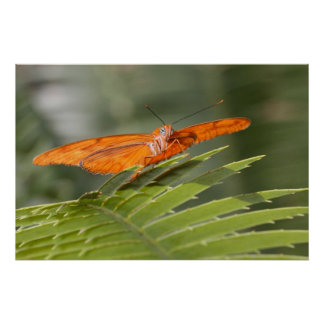 Julia-Schmetterling auf einem Blatt Poster