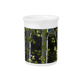 Junge Aspen-Bäume Getränke Pitcher