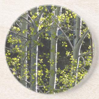 Junge Aspen-Bäume Getränkeuntersetzer