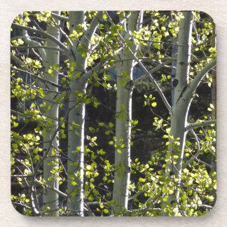 Junge Aspen-Bäume Untersetzer