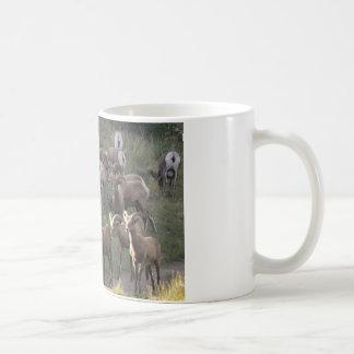 Junge Bighorn-Schafe Kaffeetasse