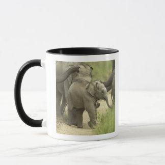 Junge eine des indischen/asiatischen Elefanten auf Tasse