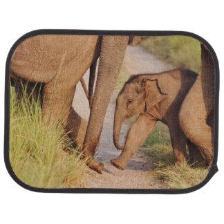Junge eine des indischen asiatischen Elefanten Automatte