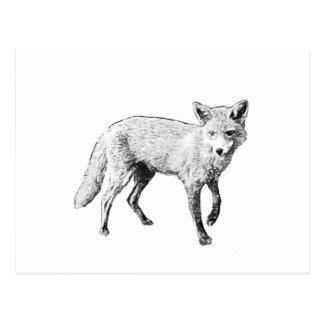 Junge Fox-Skizze Postkarte