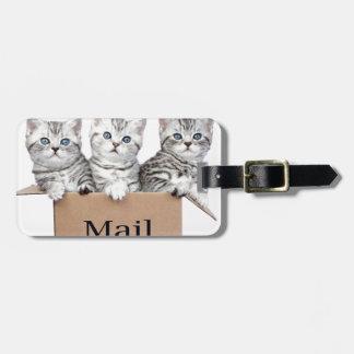 Junge Katzen im Sammelpack mit Wort Post Gepäckanhänger
