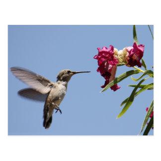 Junge Kolibri-Postkarte Postkarte