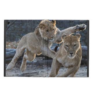 Junge Löwe-Spiele mit Mamma