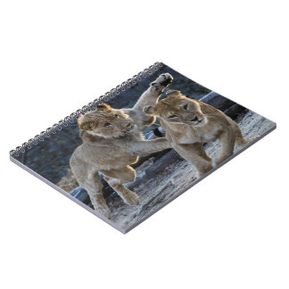 Junge Löwe-Spiele mit Mamma Spiral Notizblock