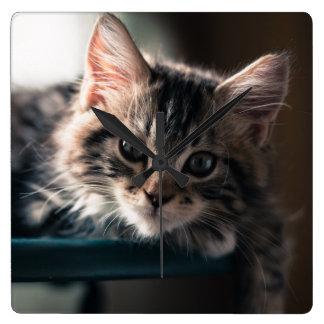 Junge männliche Tabby-Katze 2 Quadratische Wanduhr