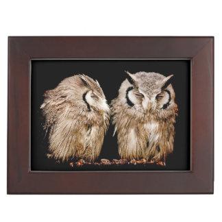 Junge Owlets Erinnerungsdose