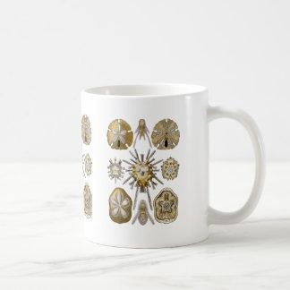 Junge Seeigel Kaffeetasse