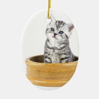 Junge silberne Tabbykatze, die in der hölzernen Ovales Keramik Ornament