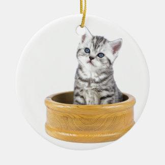 Junge silberne Tabbykatze, die in der hölzernen Rundes Keramik Ornament
