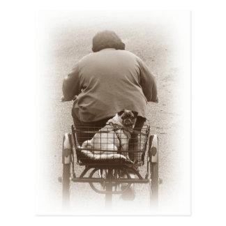 Junge und Mops-Hund, der für eine Fahrpostkarte Postkarte