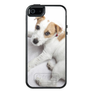 Junger Jack-Russell-Terrier OtterBox iPhone 5/5s/SE Hülle