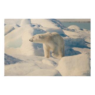 Junger männlicher Eisbär Holzwanddeko