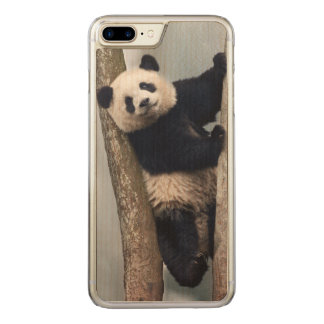 Junger Panda, der einen Baum, China klettert Carved iPhone 8 Plus/7 Plus Hülle