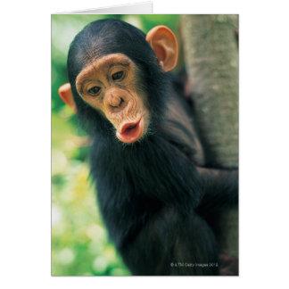 Junger Schimpanse (Pantroglodytes) Grußkarte