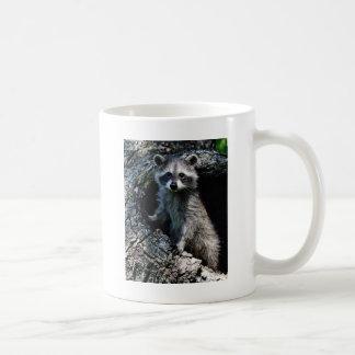 Junger Waschbär Tasse