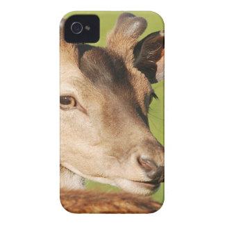 Junges intelligentes wildes Tier Daniels iPhone 4 Case-Mate Hülle