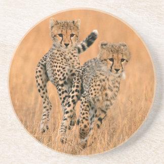 Junges Laufen der Gepard-(Acinonyx Jubatus) Getränkeuntersetzer