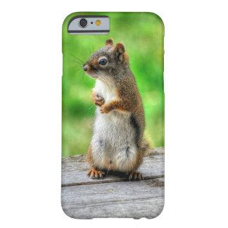 Junges männliches Eichhörnchen-stehendes Tier-Foto Barely There iPhone 6 Hülle