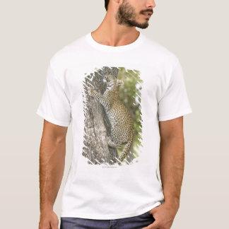 Junges männliches Klettern des Leoparden (Panthera T-Shirt