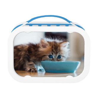 Junges persisches Kätzchen Brotdose