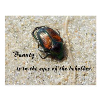 Käfer auf Cuttyhunk Insel Postkarte