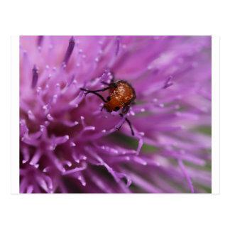 Käfer auf einer Milch-Distel Postkarte