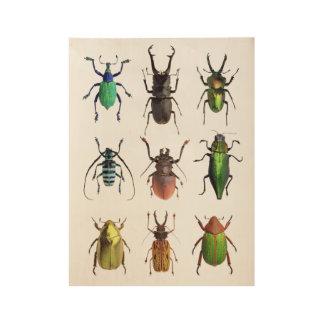 Käfer-Manie-schöne Wanzen Holzposter