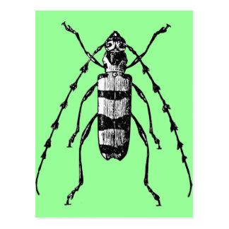 Käfer Postkarte