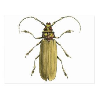 Käfer, Prionus Corticinus Postkarte