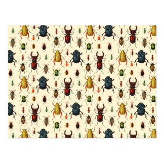 Käfer-Vielzahl Postkarte