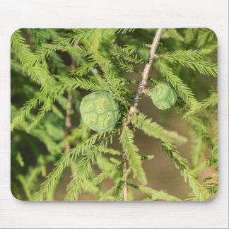Kahle Zypresse-Samen-Kegel Mousepad