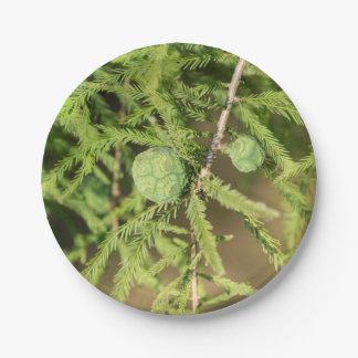 Kahle Zypresse-Samen-Kegel Pappteller