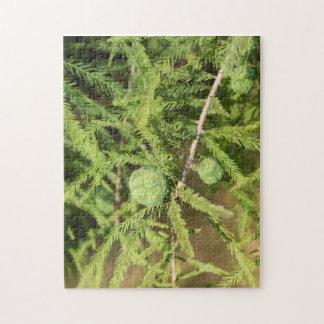 Kahle Zypresse-Samen-Kegel Puzzle