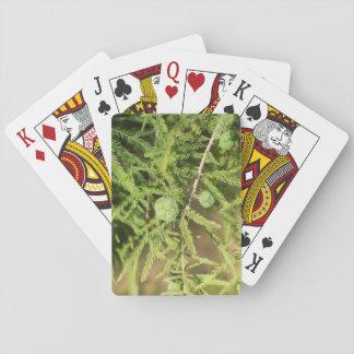 Kahle Zypresse-Samen-Kegel Spielkarten