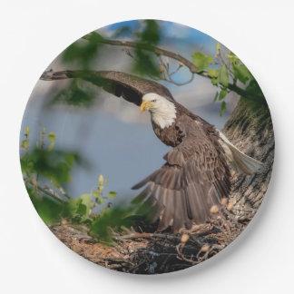 Kahler Adler, der das Nest verlässt Pappteller