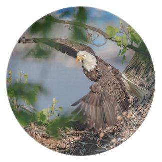 Kahler Adler, der das Nest verlässt Teller