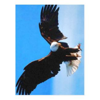 Kahler Amerikaner Eagle Postkarten